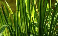 植物由来の画像
